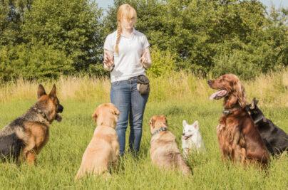 Frau mit Hunden - Hauptberuflich mit Hunden arbeiten