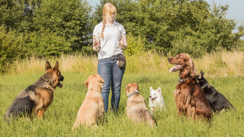 Hauptberuflich mit Hunden arbeiten